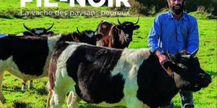 La vache des paysans heureux